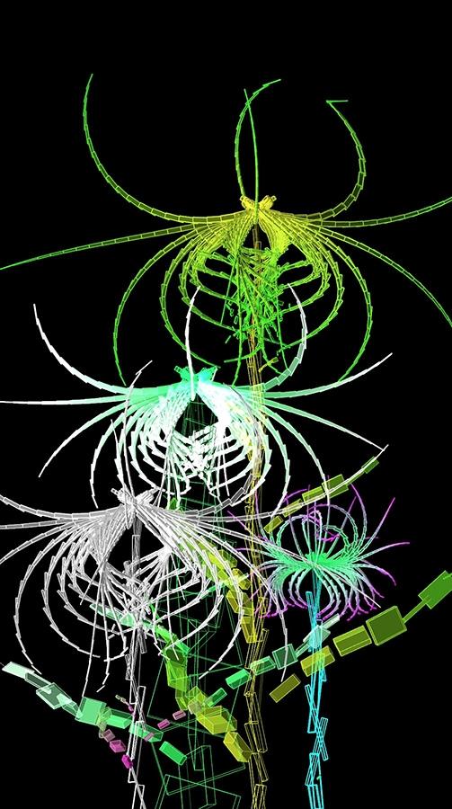 Cleome Spinosa de Buñuel, graine virtuelle de la série Fractal Flowers, écran LCD 50pouces (112 cm x 64 cm), 2013