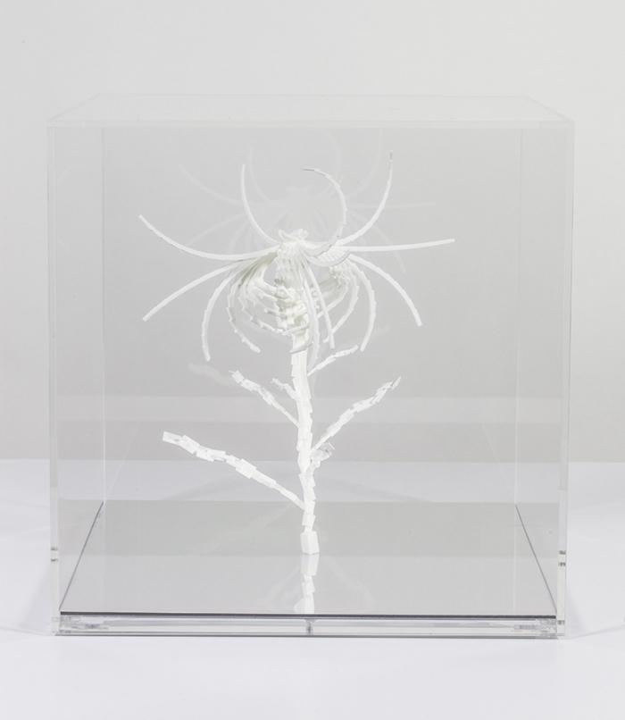 Cleome Spinosa de Buñuel, sculpture par impression 3D de graine virtuelle de la série Fractal Flowers, 2013