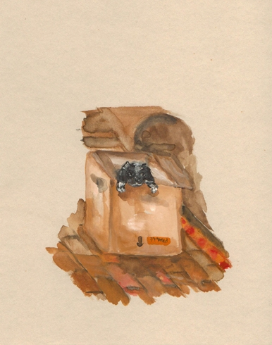 Dog in a box, watercolour on paper, 14 x 19 cm